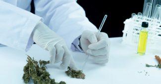 E-liquide THC : particularités, légalité et utilisation