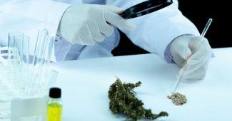 Cannabis thérapeutique en France : l'évolution des recherches